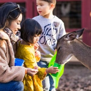 A day at Hochatown Petting Zoo