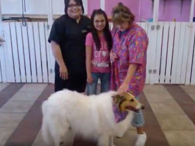 Pampered Paws Puppy Parlor Pet Store McCurtain County