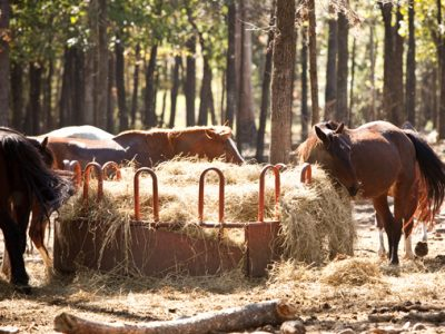 Stay or ride horses at A to Z Guest Ranch in Broken Bow Oklahoma