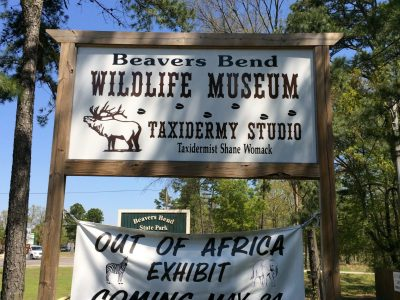 Visit the Beavers Bend Wildlife Museum and enjoy their large taxonomy collection.