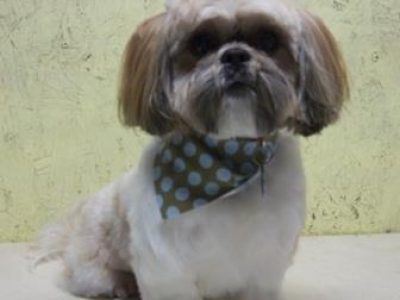 Canine Creations pet grooming business located in Broken Bow Oklahoma