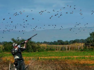 The Honobia Creek and Three Rivers WMAs are great areas for anyone looking for a different type of dove hunt that only forested habitats can provide.
